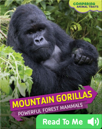 Mountain Gorillas: Powerful Forest Mammals