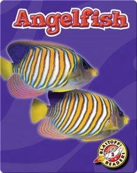 Angelfish: Oceans Alive