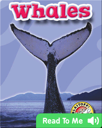 Whales: Oceans Alive