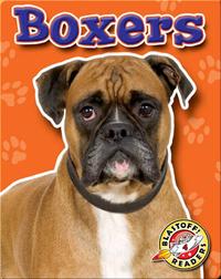 Boxers: Dog Breeds