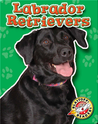 Labrador Retrievers: Dog Breeds