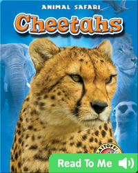 Cheetahs: Animal Safari