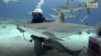 Jonathan Bird's Blue World: Holding a Shark!