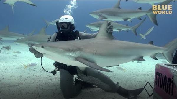 Jonathan Bird's Blue World: Holding a Shark!