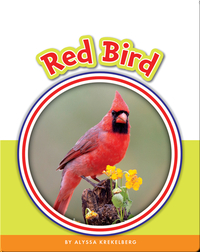 Learning Sight Words: Red Bird