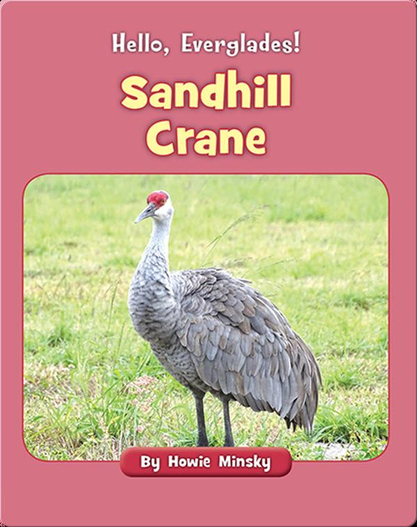 Hello, Everglades!: Sandhill Crane