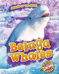 Animals of the Arctic: Beluga Whales