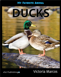 My Favorite Animal: Ducks