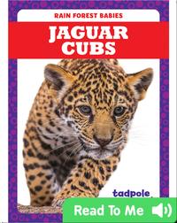 Rain Forest Babies: Jaguar Cubs