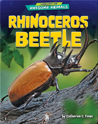 Awesome Animals: Rhinoceros Beetle