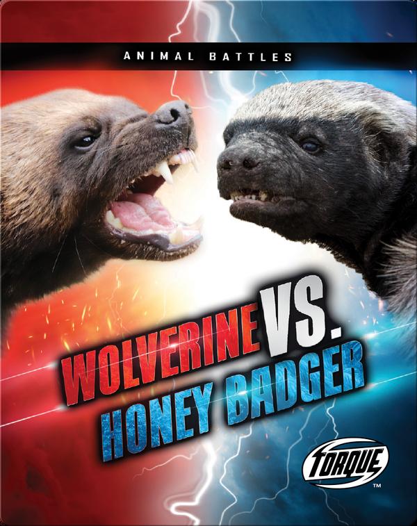Animal Battles: Wolverine vs. Honey Badger