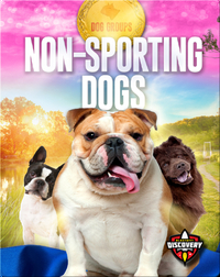 Dog Groups: Non-sporting Dogs
