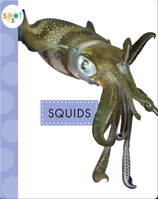Ocean Animals: Squids