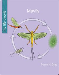 My Life Cycle: Mayfly