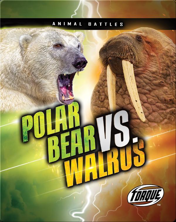 Animal Battles: Polar Bear vs. Walrus