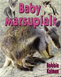 Baby Marsupials