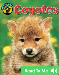 Coyotes (Wild Canine Pups)