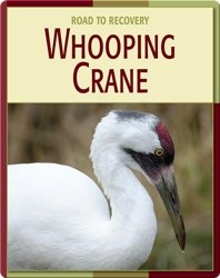 Road To Recovery: Whooping Crane
