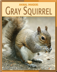 Animal Invaders: Gray Squirrel