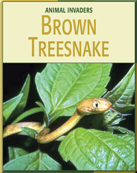 Animal Invaders: Brown Treesnake