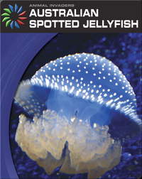 Animal Invaders: Australian Spotted Jellyfish