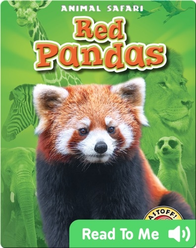 Red Pandas: Animal Safari