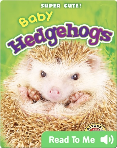 Super Cute! Baby Hedgehogs