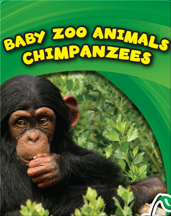Baby Zoo Animals: Chimpanzees