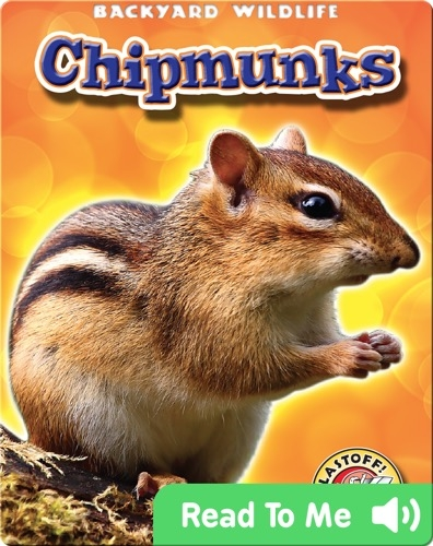 Chipmunks: Backyard Wildlife