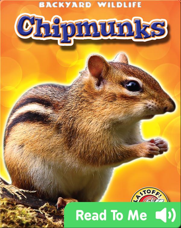 Chipmunks: Backyard Wildlife