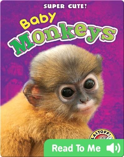 Super Cute! Baby Monkeys