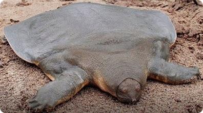 World's Weirdest Turtle