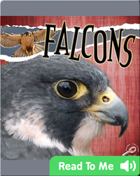 Raptors: Falcons
