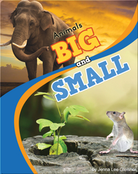 Animals Big And Small