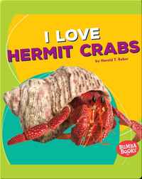 I Love Hermit Crabs