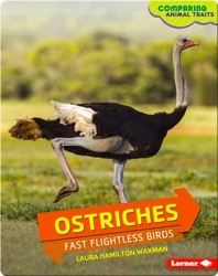 Ostriches: Fast Flightless Birds