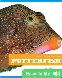 Life Under The Sea: Pufferfish