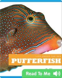 Life Under The Sea: Pufferfish