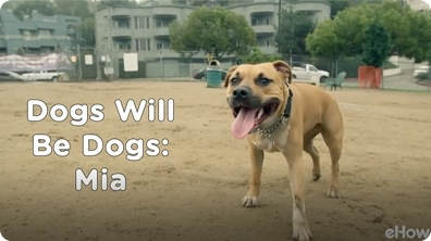 Mia | Dogs Will Be Dogs