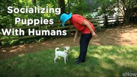 Socializing a Puppy 3: Meeting People | Teacher's Pet With Victoria Stilwell