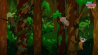 Rainforest Song