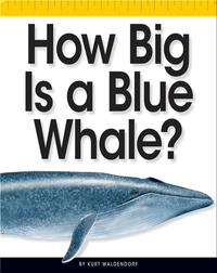 How Big Is a Blue Whale?
