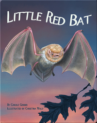 Little Red Bat
