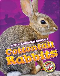 North American Animals: Cottontail Rabbits
