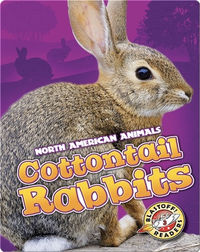 North American Animals: Cottontail Rabbits