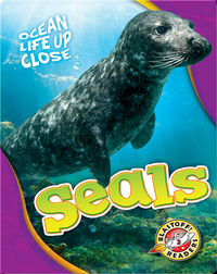 Ocean Life Up Close: Seals