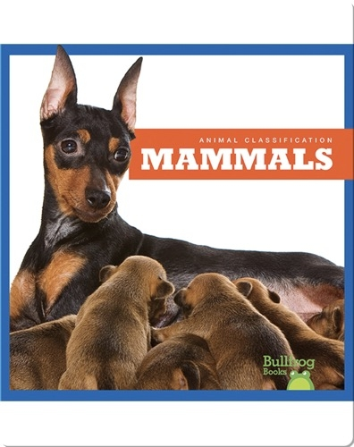 Animal Classification: Mammals