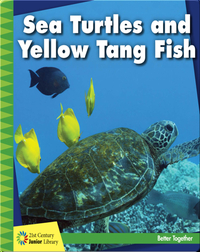 Sea Turtles and Yellow Tang Fish