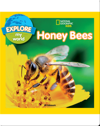 Explore My World Honey Bees