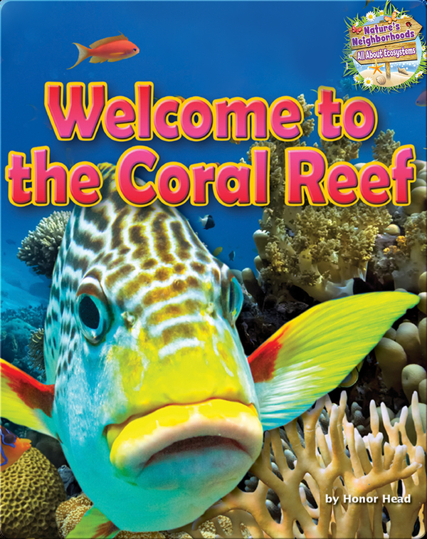 Welcome to the Coral Reef